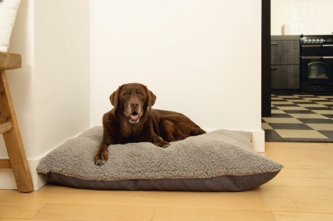 Ruba memoryfoam orthopedic cushion for dog